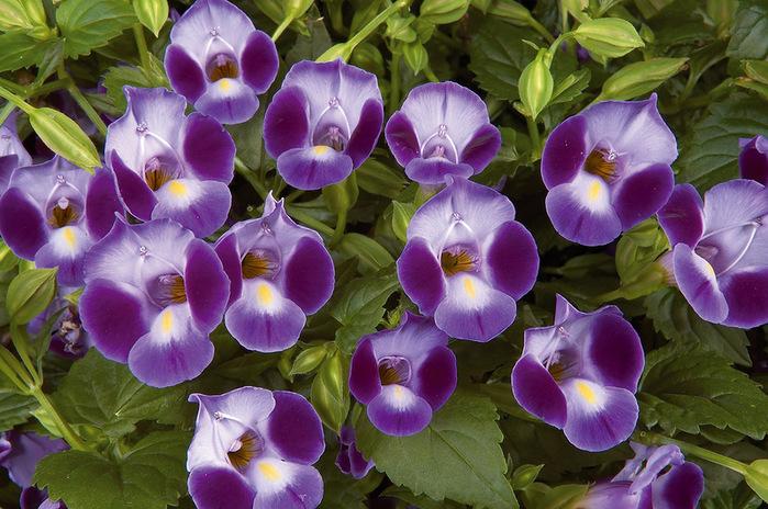 красивые цветы фото 17 (700x464, 168Kb)