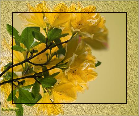 Желтые-цв (450x376, 355Kb)