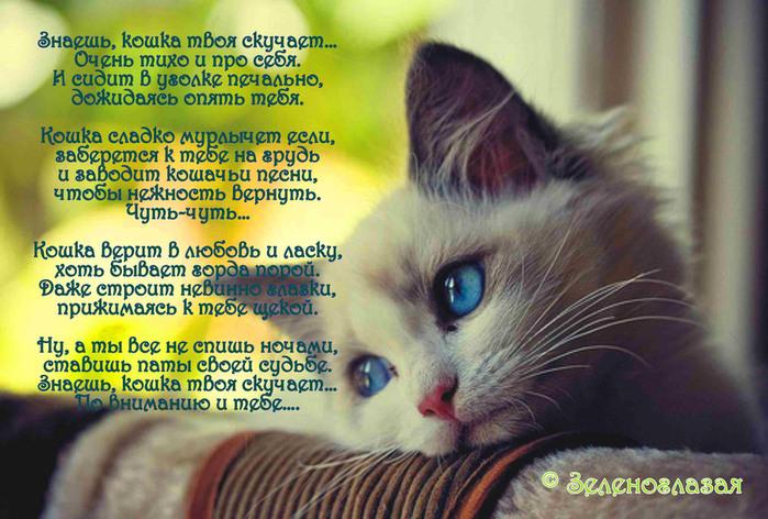 Стихи кот хозяину