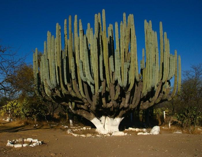 7. Дерево (700x545, 105Kb)