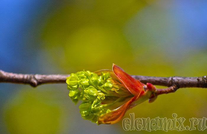 зеленый цвет весенний/4348076_5vesna (700x454, 49Kb)