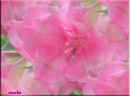 Весенняя-розовые-цветы (450x331, 220Kb)