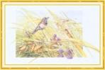 Превью Impressions of Nature 2004-39 (700x465, 215Kb)