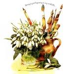 Превью Natures Sketchbook 07 (625x700, 96Kb)