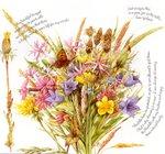 Превью Natures Sketchbook 40 (700x655, 132Kb)