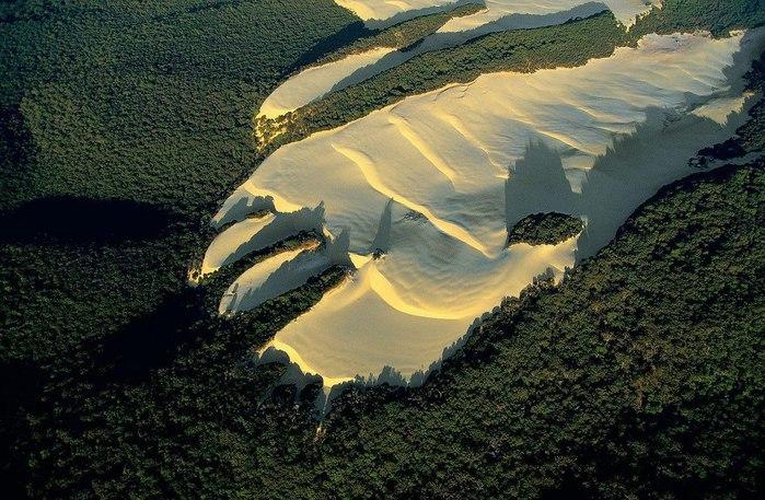 Песчаная дюна посреди леса на Острове Фрейзер, Квинсленд, Австралия (700x457, 114Kb)