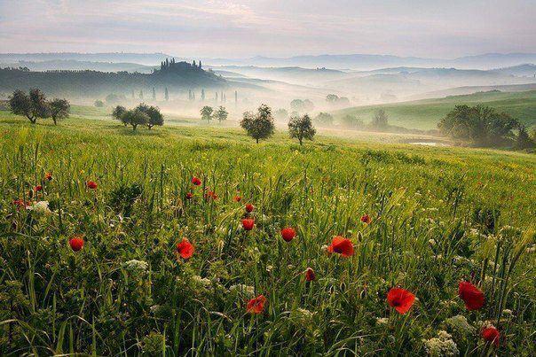 Утро в Тоскане, Италия (604x403, 73Kb)