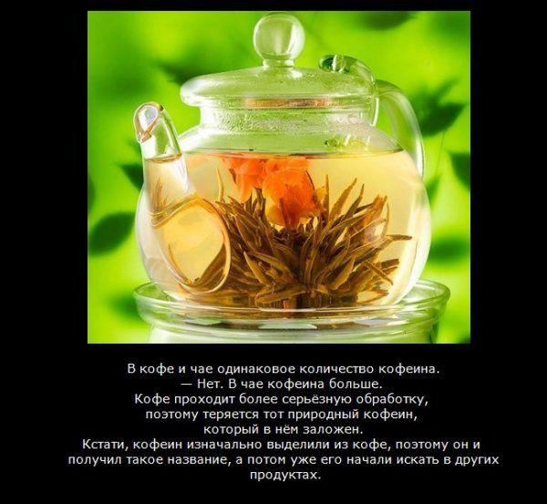 какой чай полезен при похудении