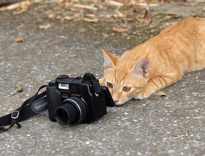 camera-drole (700x531, 115Kb)
