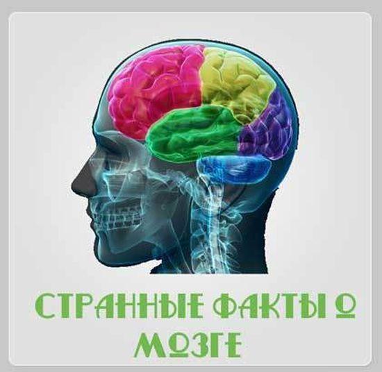 brain_01 (550x536, 36Kb)