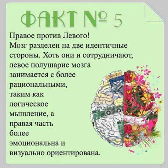 brain_12 (550x552, 57Kb)