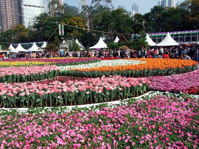 фестиваль цветов в гонгконге 2013 3 (640x480, 415Kb)