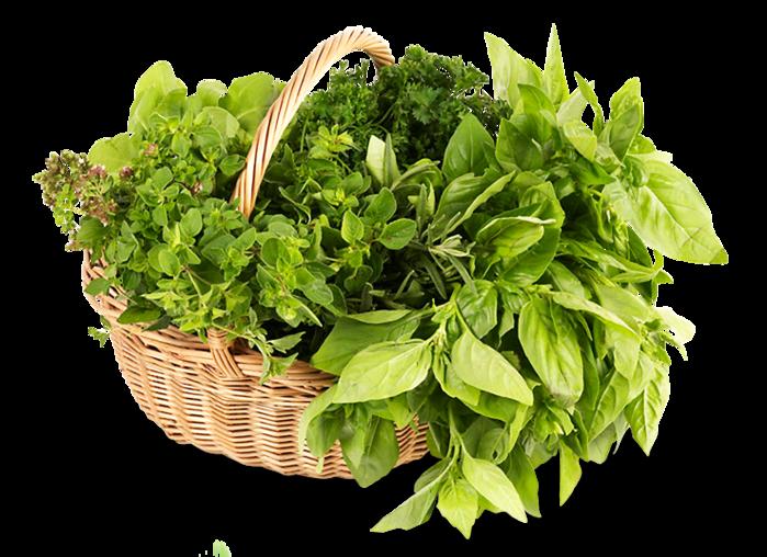 В Тюменском районе одноименного региона откроется тепличное производство зелени