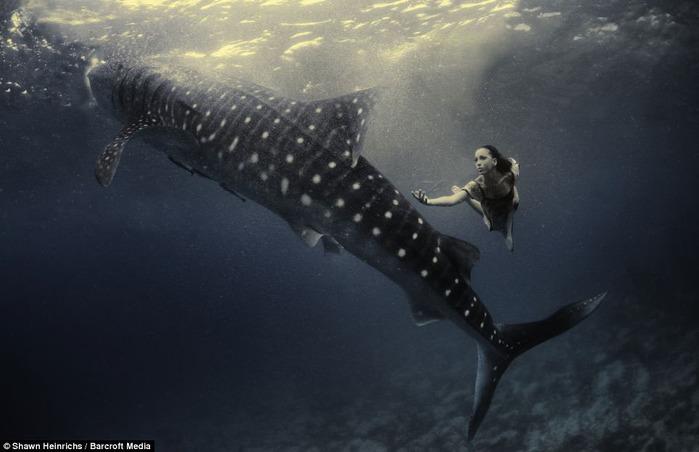 китовая акула фото 2 (700x452, 68Kb)
