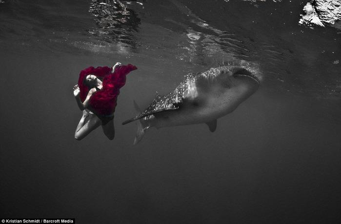 китовая акула фото 4 (700x459, 62Kb)