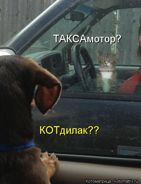 kotomatritsa__100 (537x700, 47Kb)