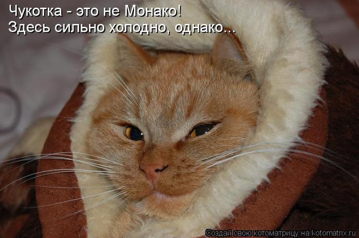 kotomatritsa_Bt (700x463, 48Kb)