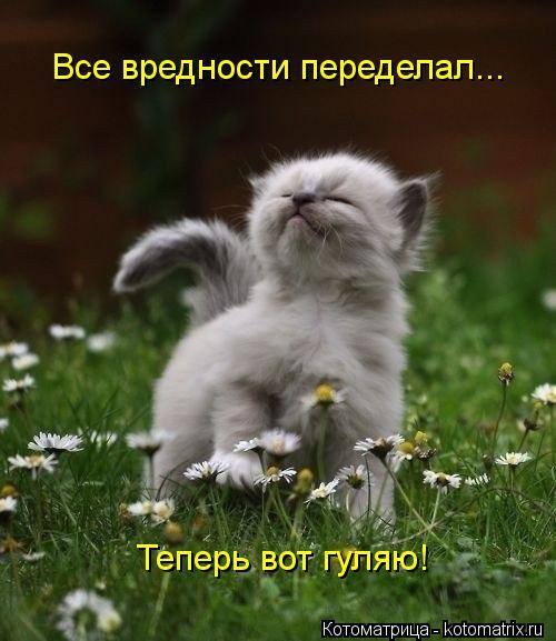 kotomatritsa_hX (500x577, 45Kb)