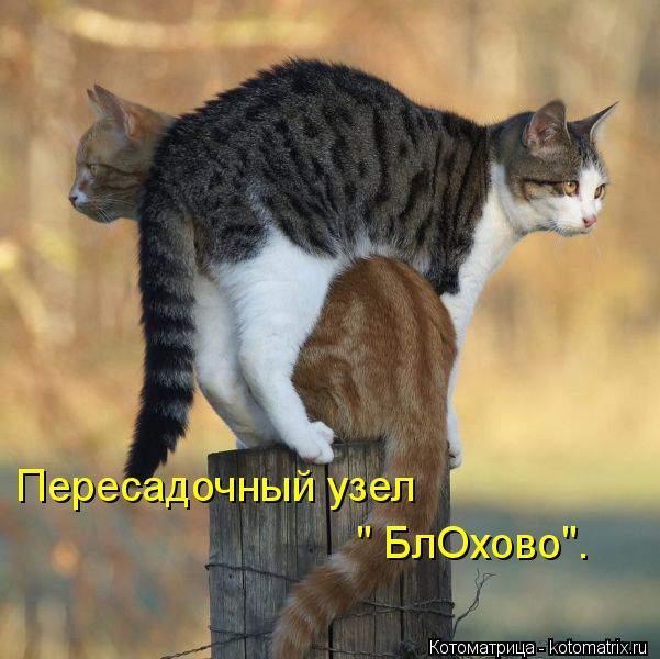 kotomatritsa_pg (601x600, 52Kb)