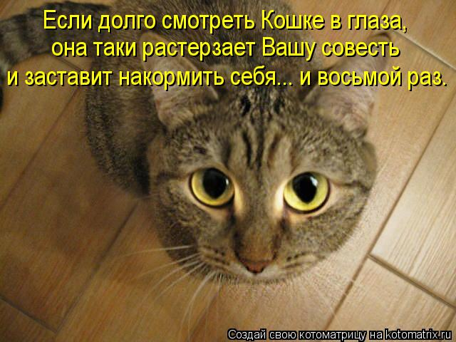 kotomatritsa_tY (640x480, 58Kb)