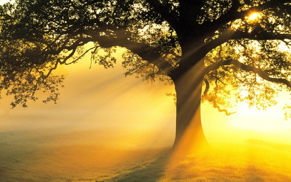 tree_and_the_sunrays-1280x800[1] (600x375, 81Kb)