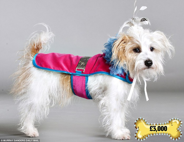 одежда для собак фото (700x541, 80Kb)