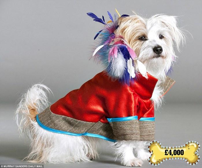одежда для собак фото 2 (700x582, 99Kb)