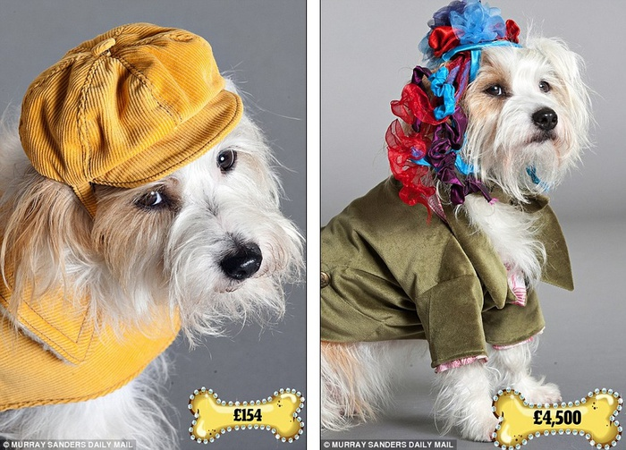 одежда для собак фото 4 (700x503, 165Kb)
