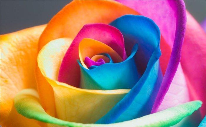 Картинки цветок разноцветный 8