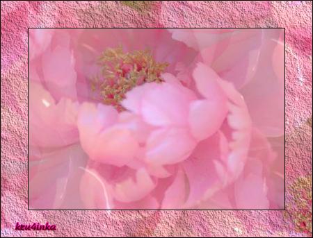 Розовый-пион (450x343, 279Kb)