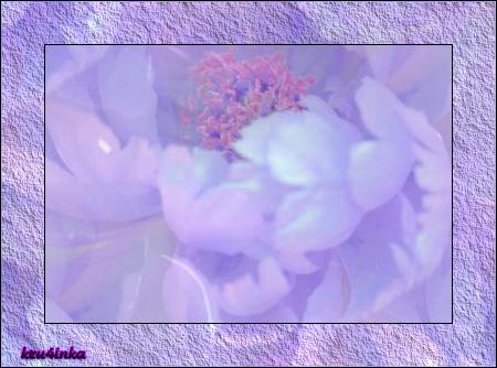 Сиреневый-пион (450x334, 242Kb)