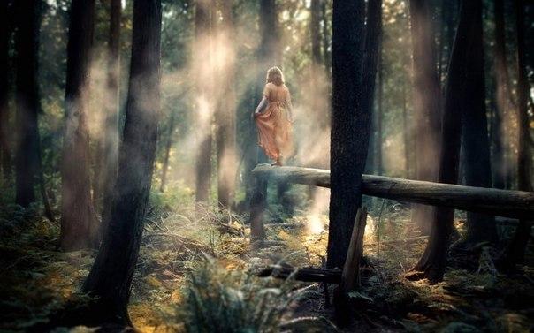 раком фото в лесу