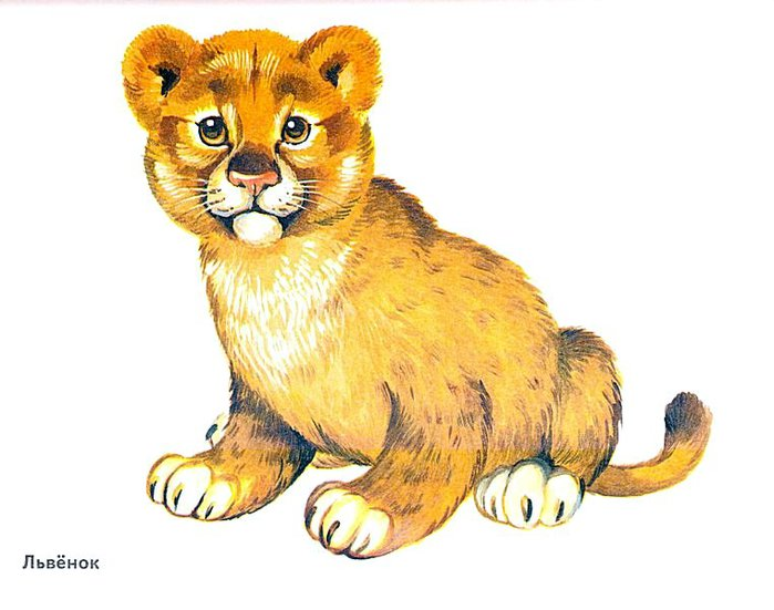 Животные в картинках для детей детского сада 17