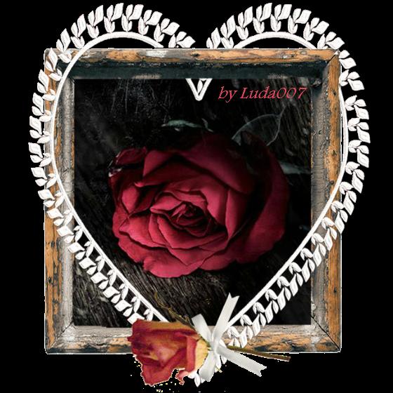 3427527_rose (560x560, 548Kb)