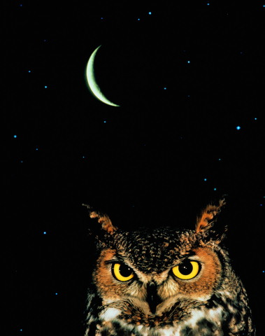 Сава и Луна (379x480, 30Kb)