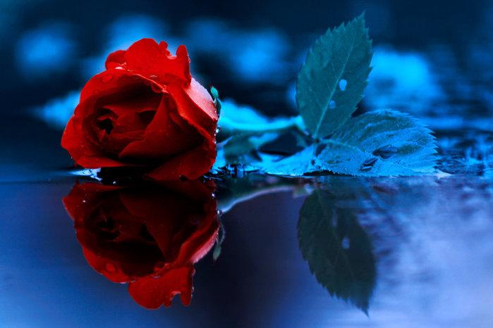 Гугл цветы картинки 8