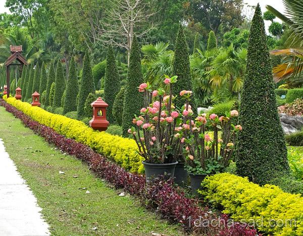 Кустарниковый миксбордер - какие виды кустарников посадить, оформление миксбордера.
