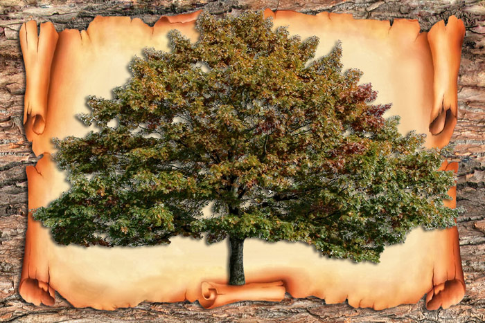 генеалогическое дерево онлайн