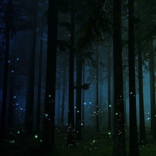 лес (2) (500x500, 44Kb)