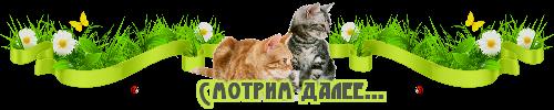 далее-кошки-новый (500x100, 55Kb)