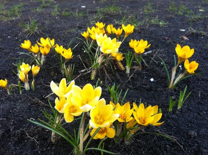 киев весна