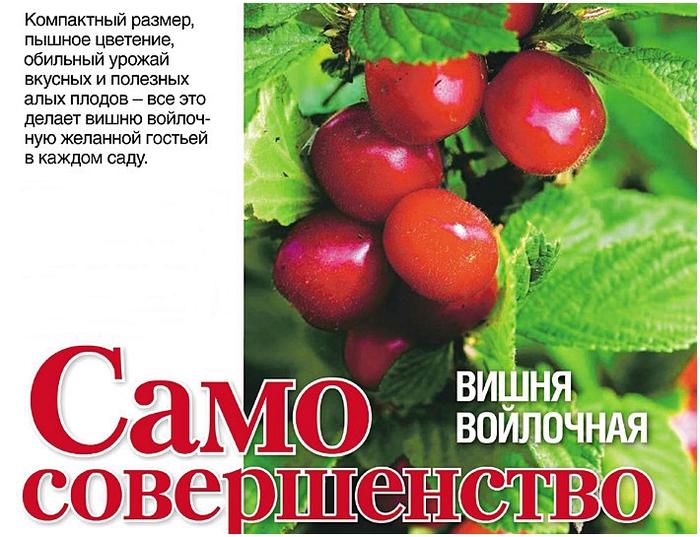 Ashampoo_Snap_2013.04.16_17h21m29s_006_ (700x537, 290Kb)