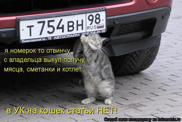 kotomatritsa_bI (700x468, 58Kb)