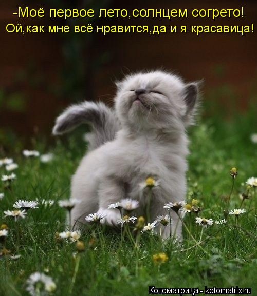 kotomatritsa_Cr (500x577, 48Kb)
