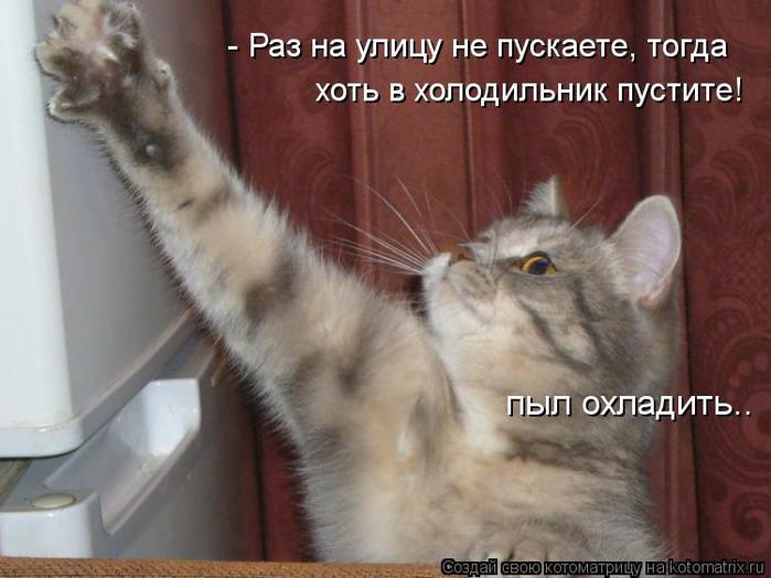 kotomatritsa_Dw (700x524, 47Kb)