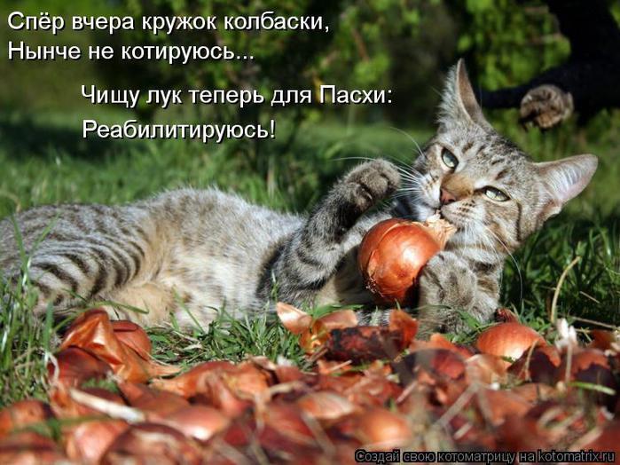 kotomatritsa_m3 (700x524, 73Kb)