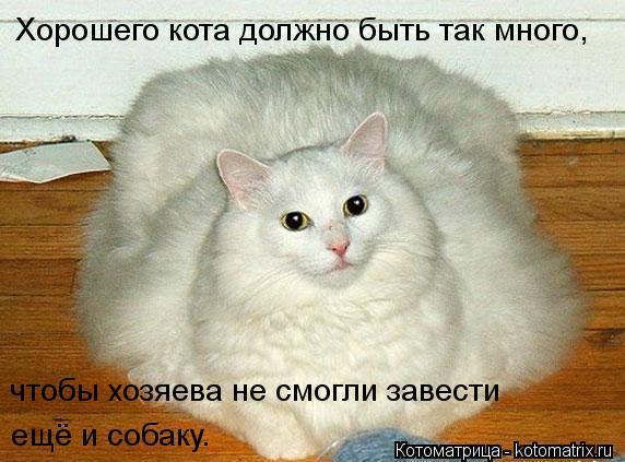 kotomatritsa_x (572x423, 48Kb)