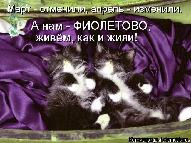kotomatritsa_Zu (650x486, 63Kb)