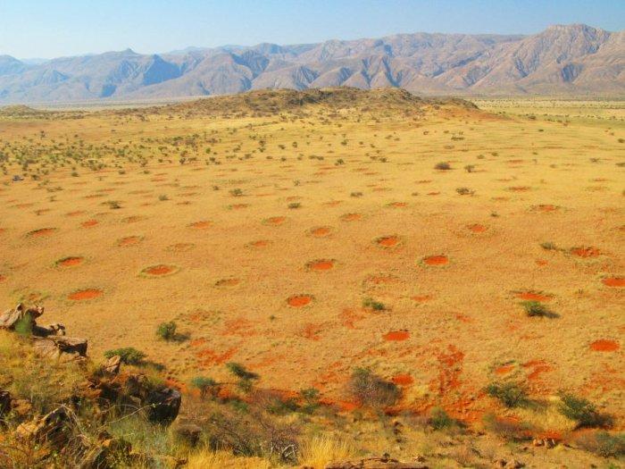 круги в пустыне намиб (700x525, 84Kb)