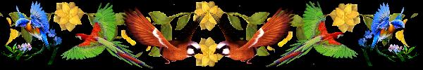 раздел-птица (600x100, 86Kb)